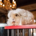 fotootchet-fokusyi-s-jivotnyimi-10-iyulya-2016-festik-moskva (22)
